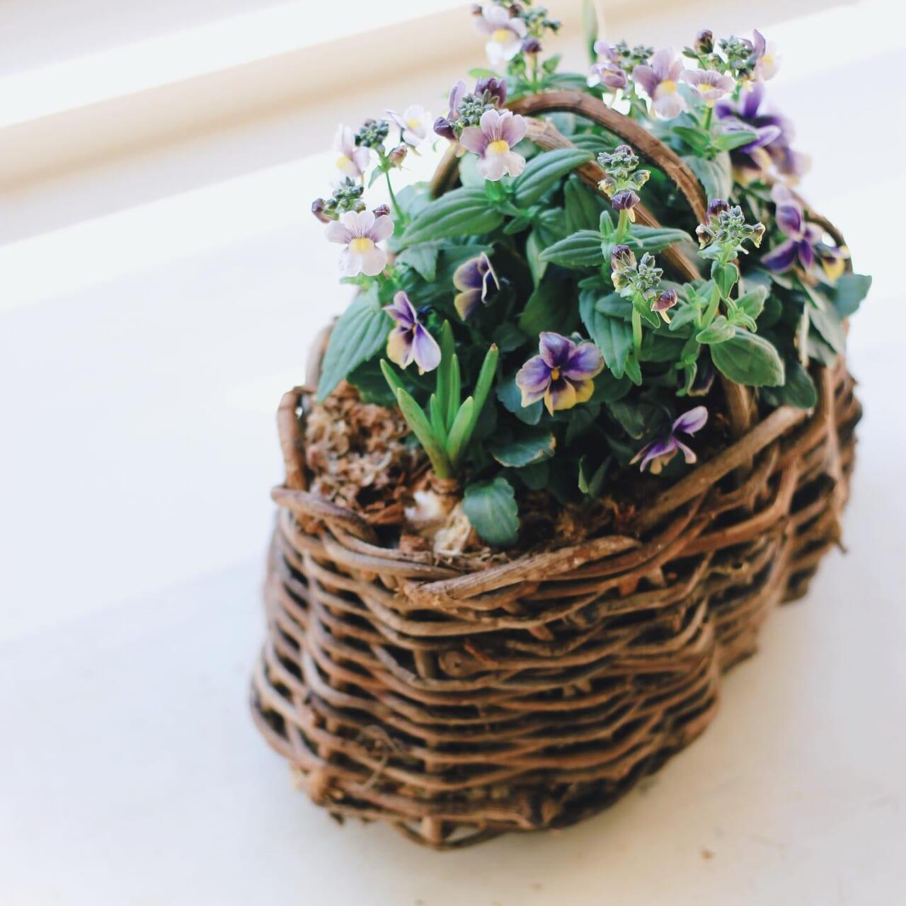 オーバルの籠はかなりちいさめだし寄せ植えしてみたら取手があるのでたいへんでしたなんとか、かわいい花畑になりました︎こちらもムスカリとスノードロップ入りで咲くのが楽しみです︎#寄せ植え#ビオラ#ネメシア#ムスカリ#スノードロップ#球根️猫には球根はダメです 気をつけてね♀️#春の花#春の寄せ植え#趣味の園芸#ガーデニング#花のある暮らし#花のある生活#植物のある暮らし#植物のある生活#植物と暮らす#籠#籠編み#かご好き#地域猫活動#地域猫の鼻チョビちゃん支援shopで寄せ植えいかがでしょうか?🤫ひとつ前の寄せ植え、過去最高にたくさんの方に見ていただきありがとうございます️2021.01.24 #植物がないと生きていけない 